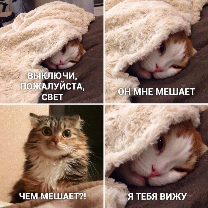 Подборка самых смешных мемов с котэ