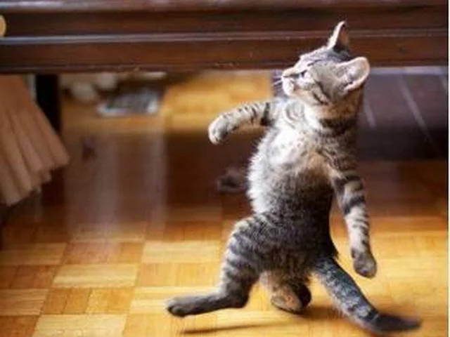 Коты и не такое могут