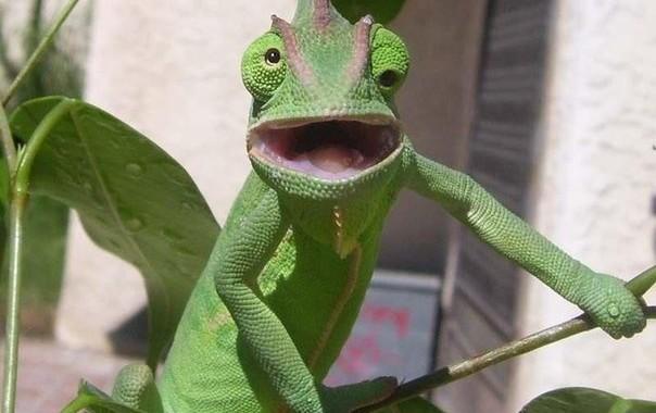 Эти животные вызывают улыбку
