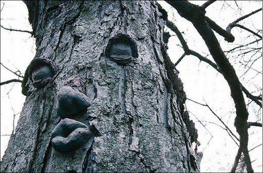 Деревья с небес