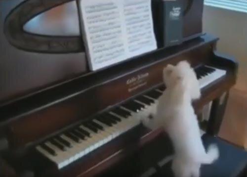 Все любят фортепиано