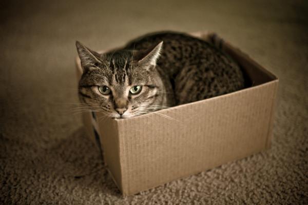 Коробка мое королевство