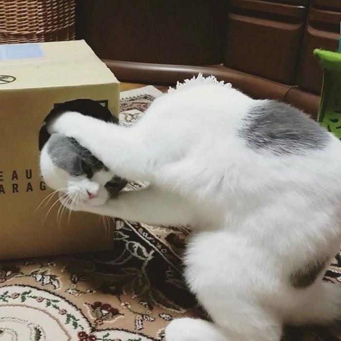 Злобные котики