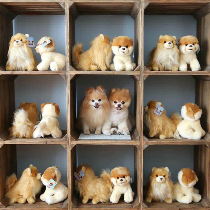 Фото подборка животных, которые играют в прятки