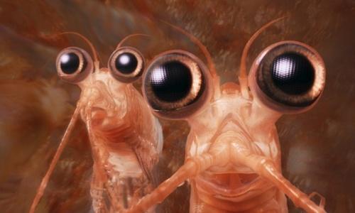 Загадочные моллюски