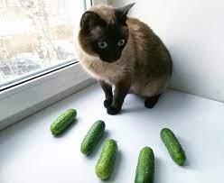 Главный враг у кошек