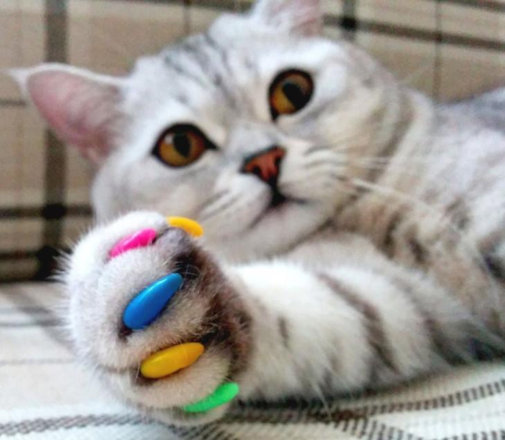 Маникюр для современных кошек