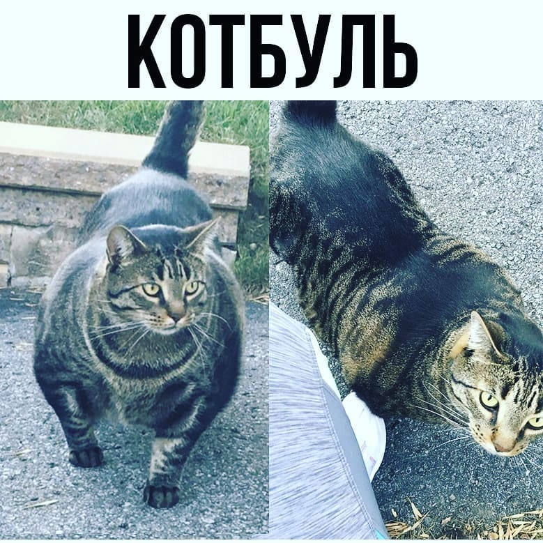 Сверхсильный кот