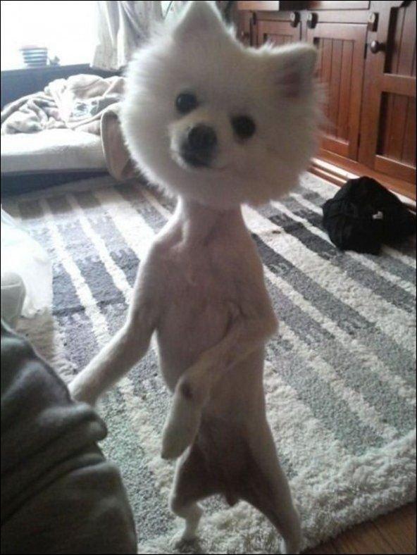 Никогда не стригите собаку так
