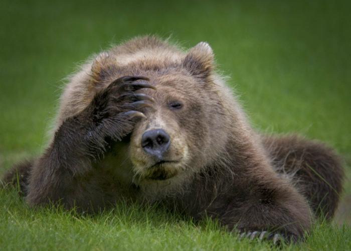 «Чем я хуже человека?» Фото подборка забавных животных, которые позаимствовали манеры поведения у человека