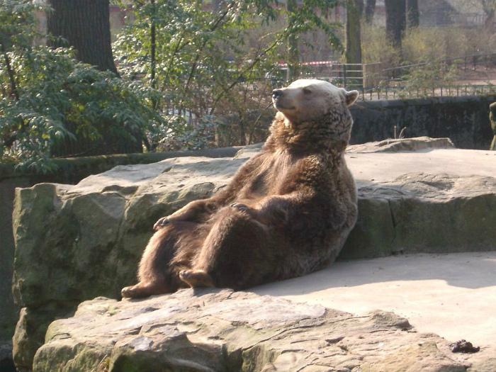 Подборка фото приколов про зоопарк