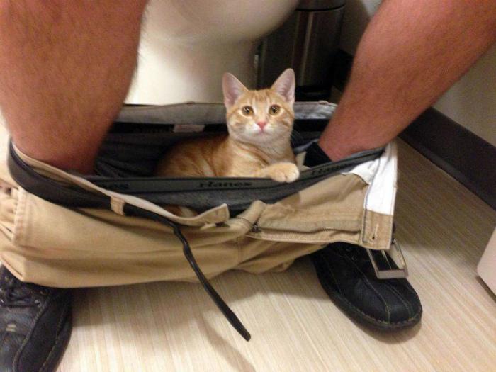 Коты-прилипалы