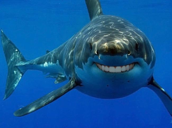 Приятные акулы