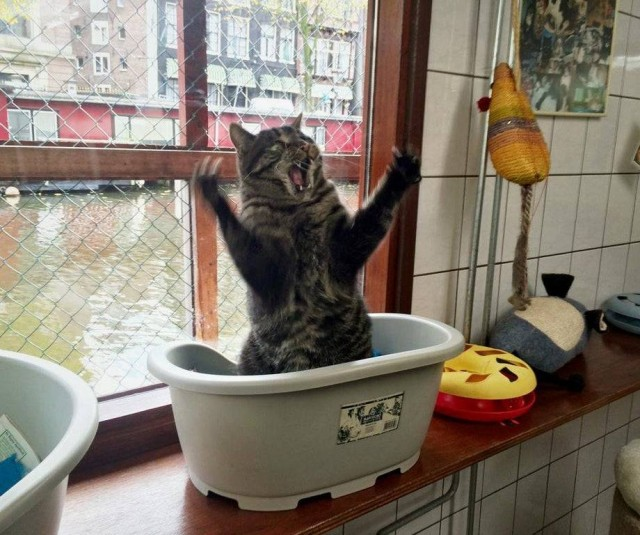 Подборка забавных фото эмоциональных котов