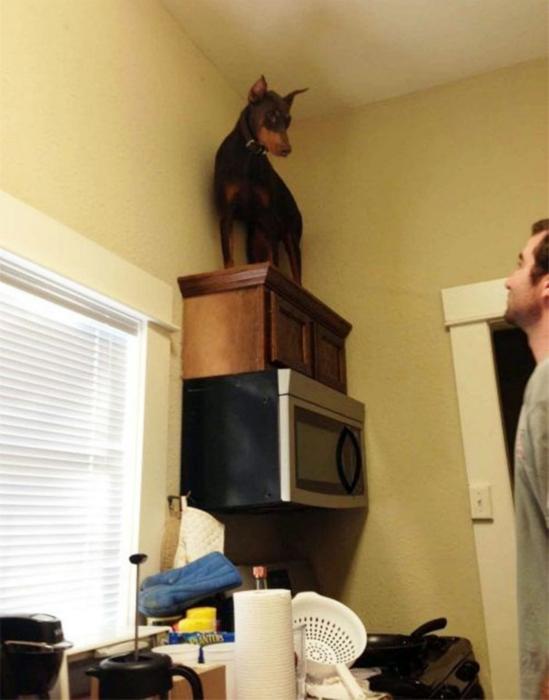 Когда даже мышь вызывает ужас. Фото подборка самых трусливых собак