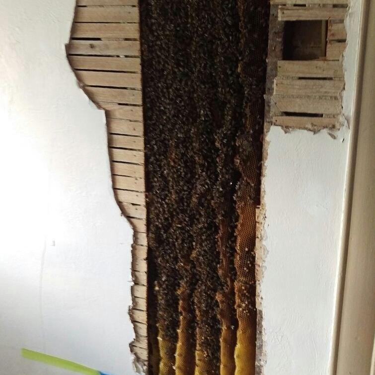 Соседство с жужжащими насекомыми