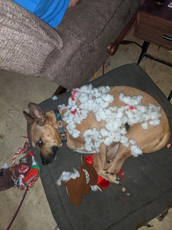 Шкодливые домашние животные