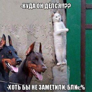 Ран, Вася, ран…