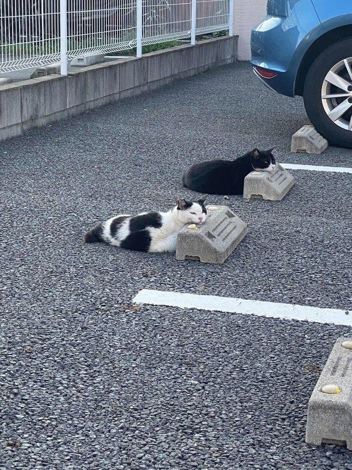 Спящие котики