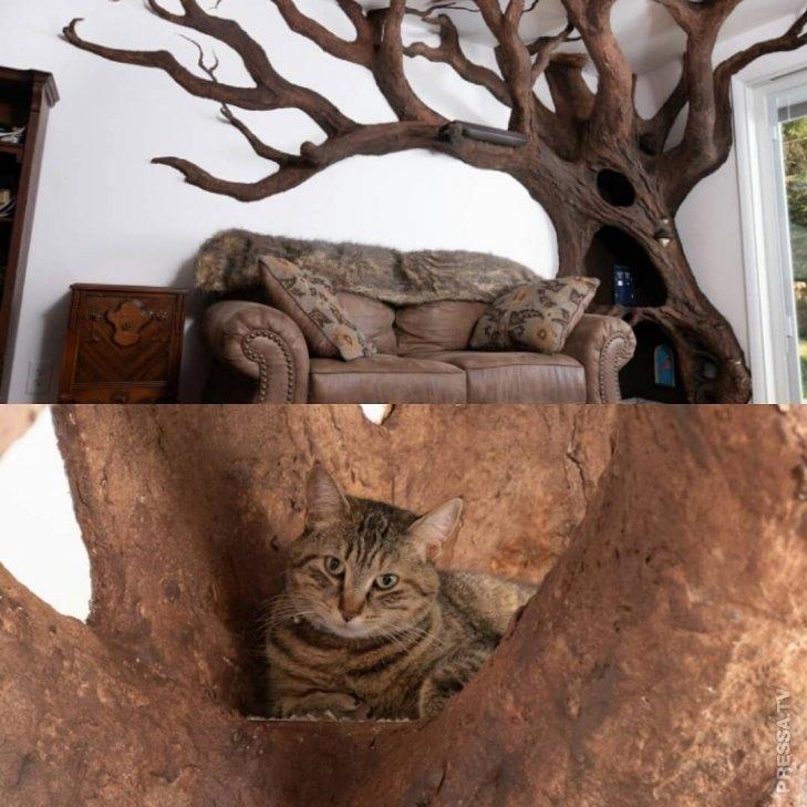 О таком мечтает каждый кот