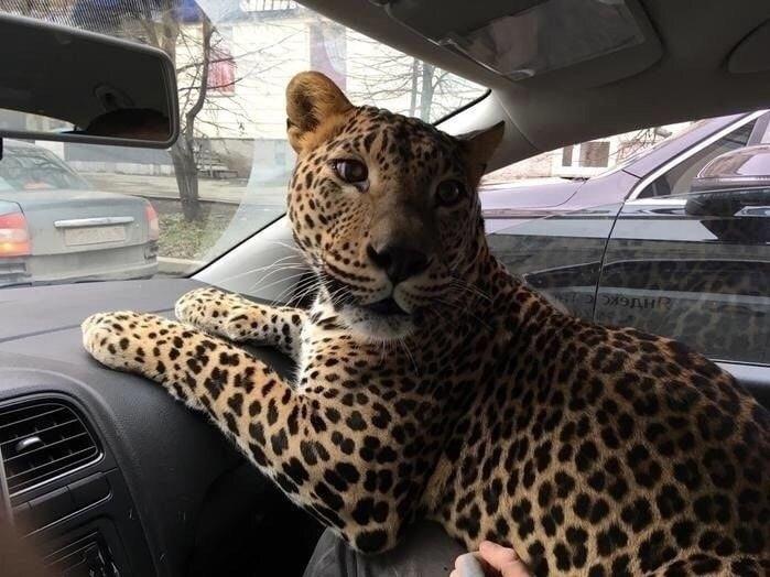 Поездка с котиком