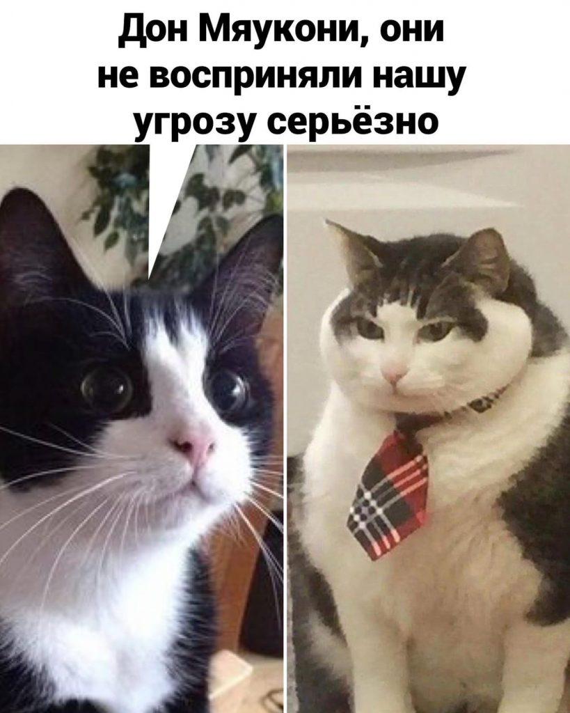 Кошачья мафия
