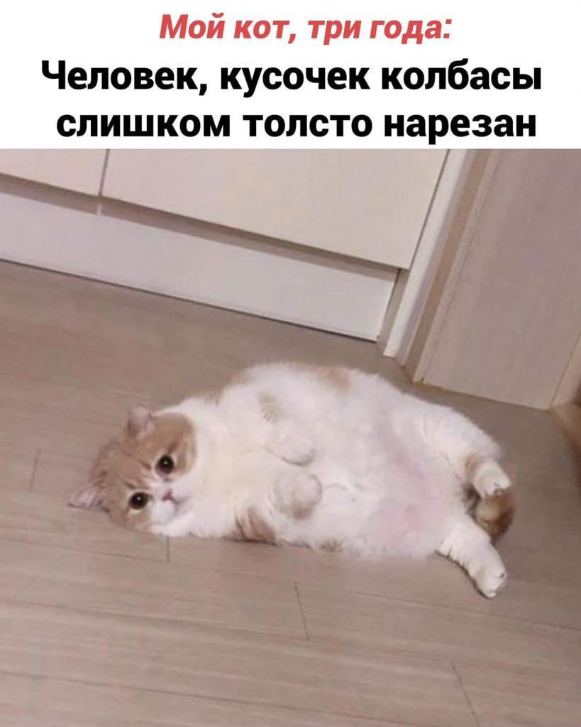 Кошачьи трудности