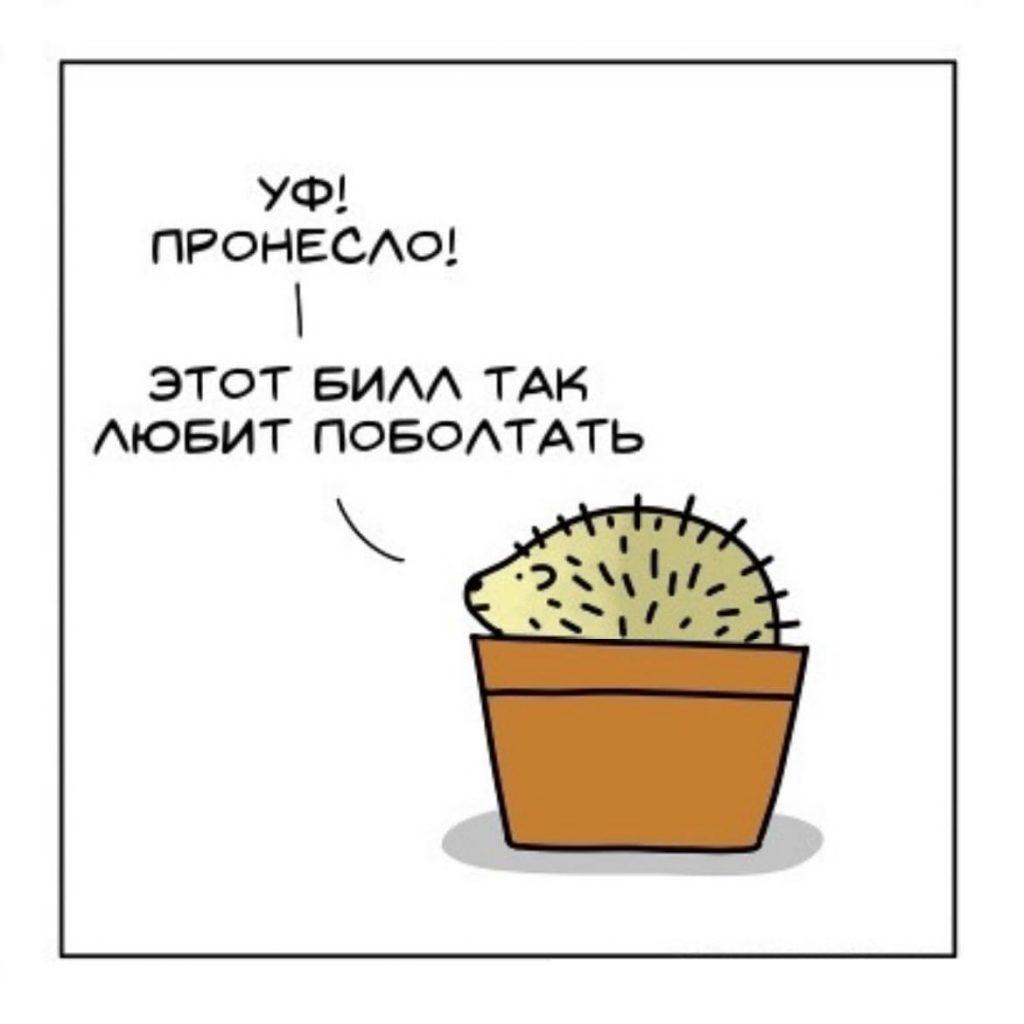 Ежи и кактусы