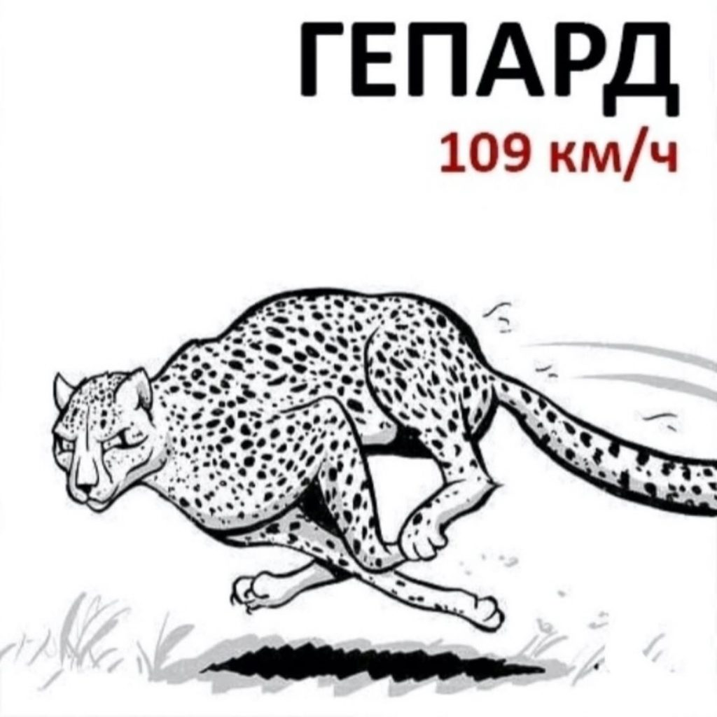 Я — скорость