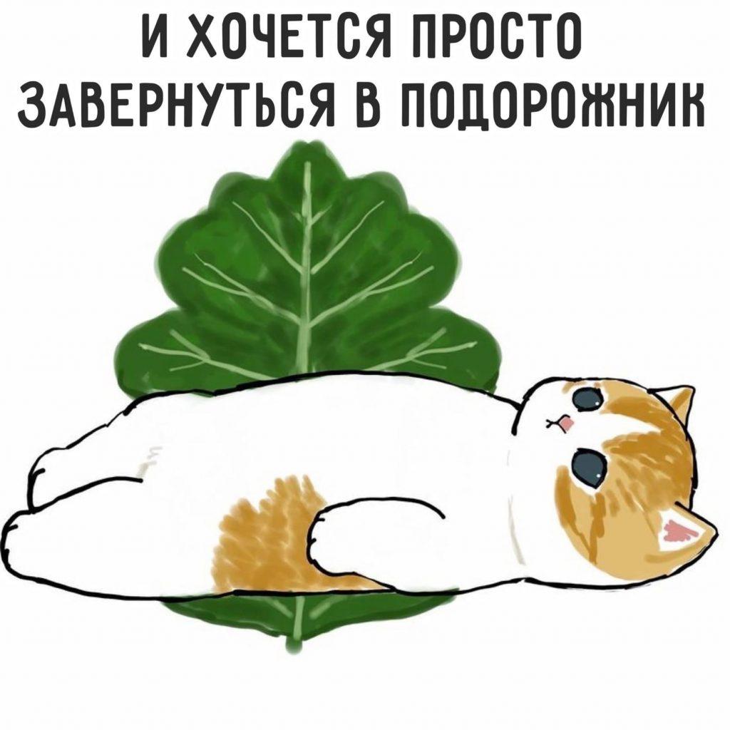 Философия от котика