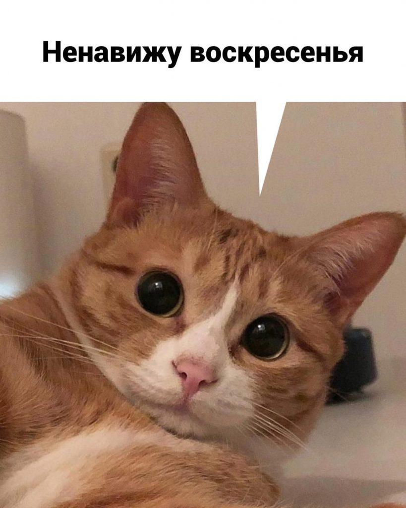 Котик и выходные