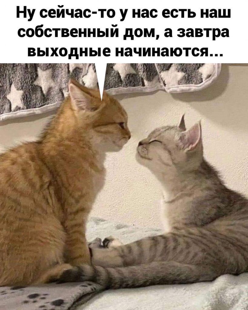 Кошачья тусовка