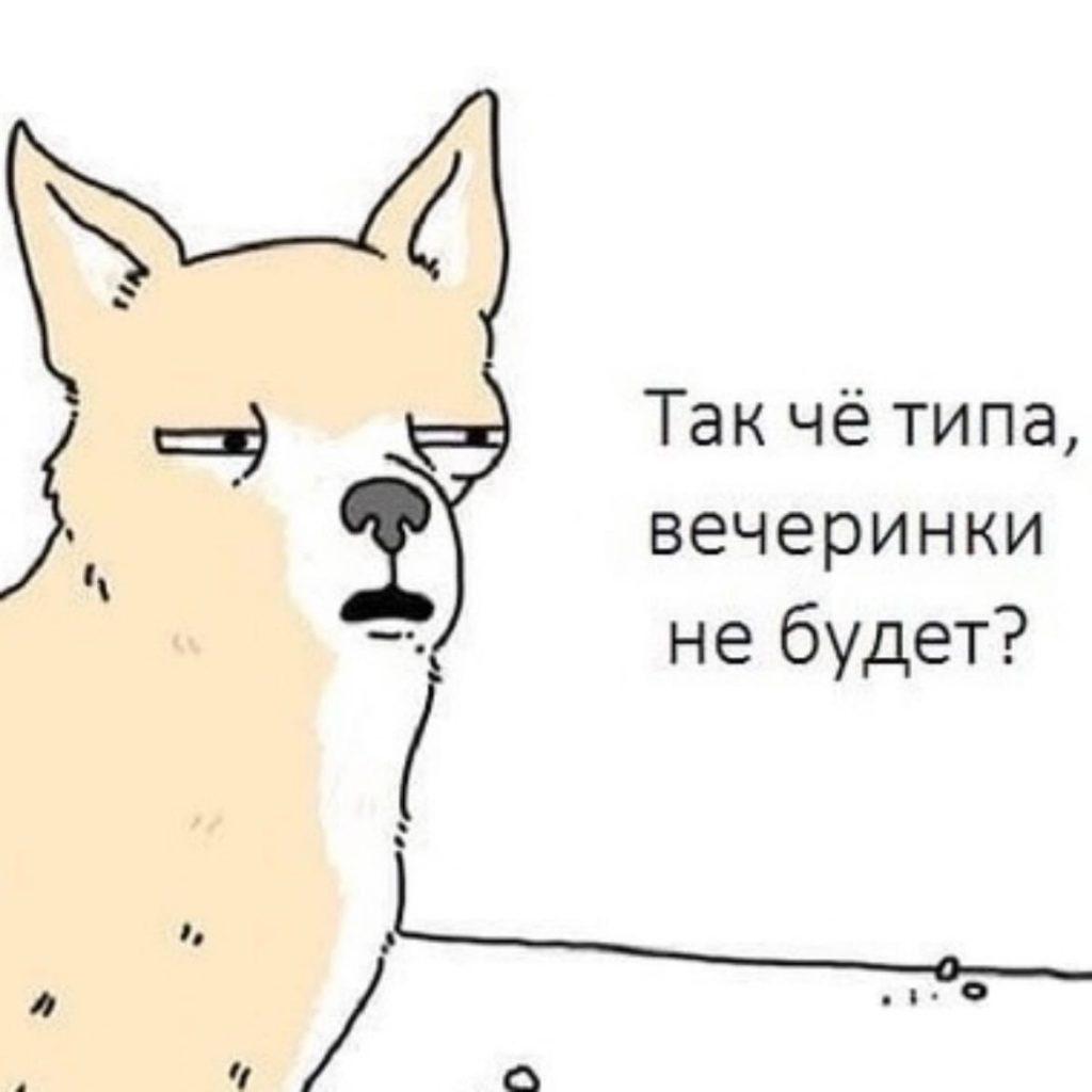 Пёс и вечеринка