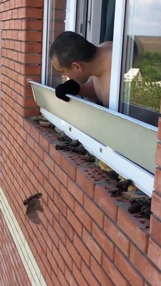 Интересное соседство