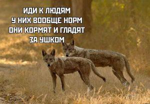 Диалог зверей