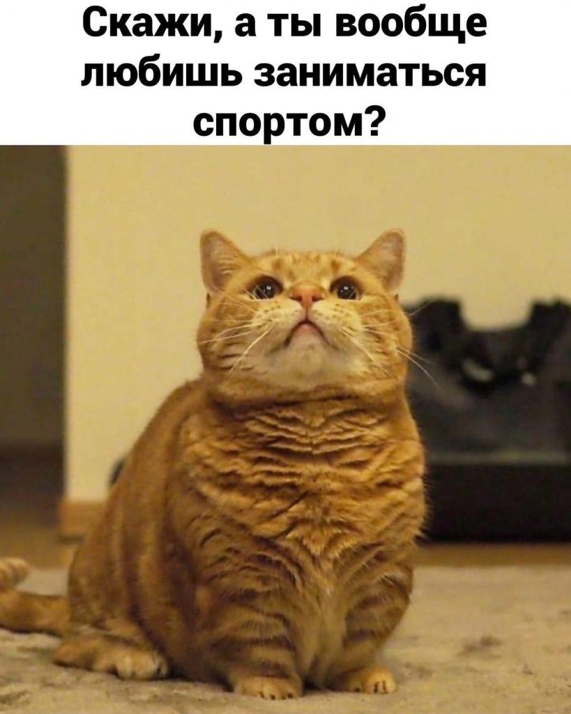 НЕспортивные коты