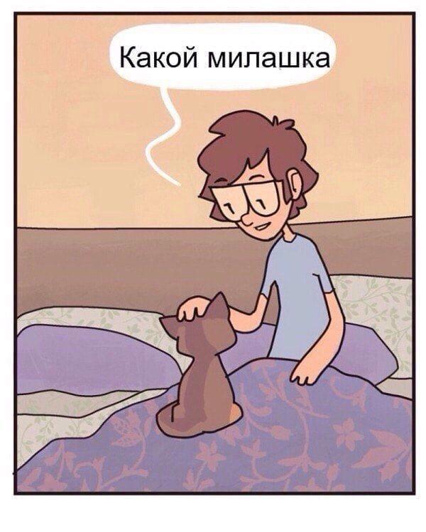 Милашка котёнок