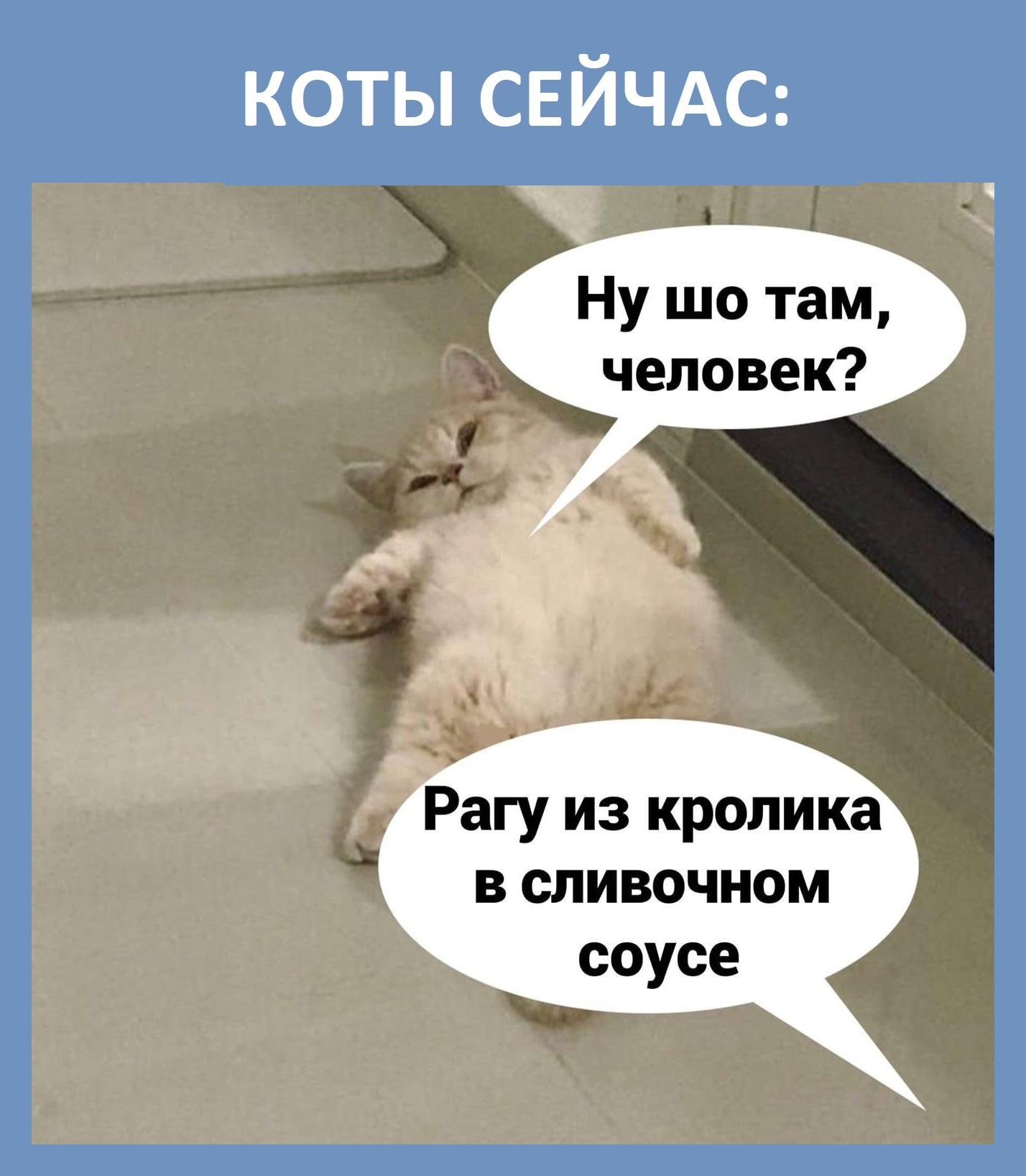 Немного правды о котах