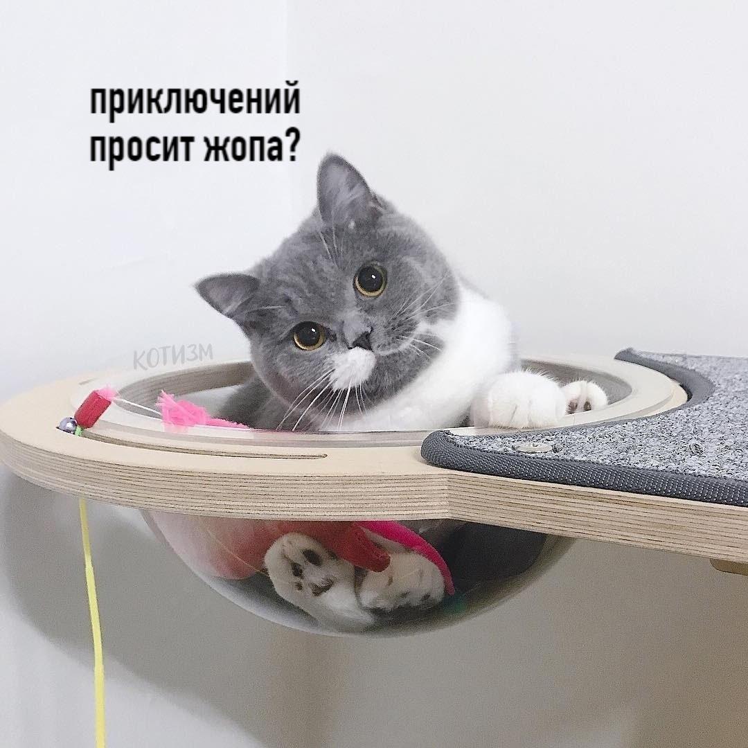 Совет от кота