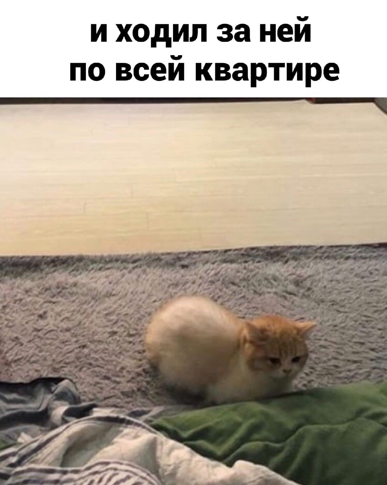 У котов тоже есть характер