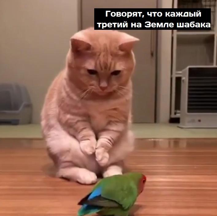 Попугайчик и котейка