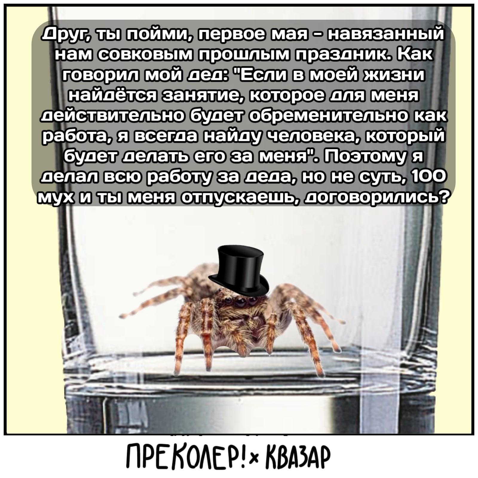 Что там болтает паук