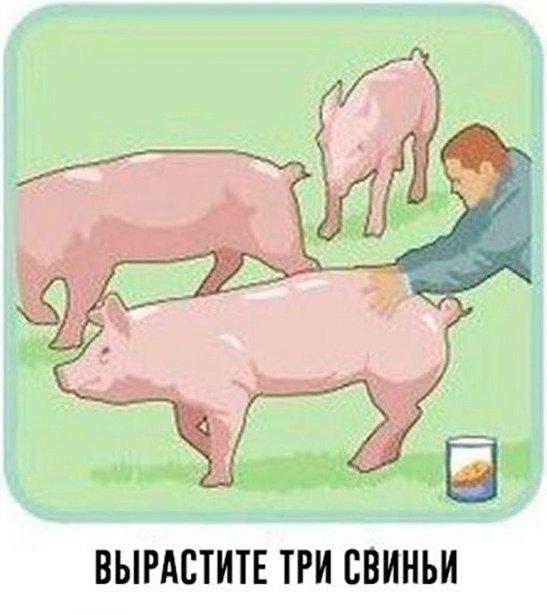 Ради такого стоит заводить свиней