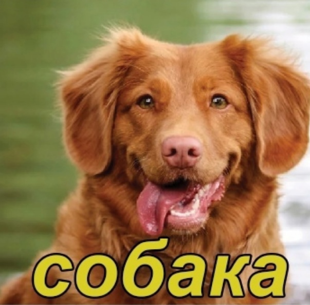 Породы собак. Краткое содержание