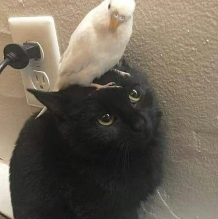 Какой ты сегодня котик