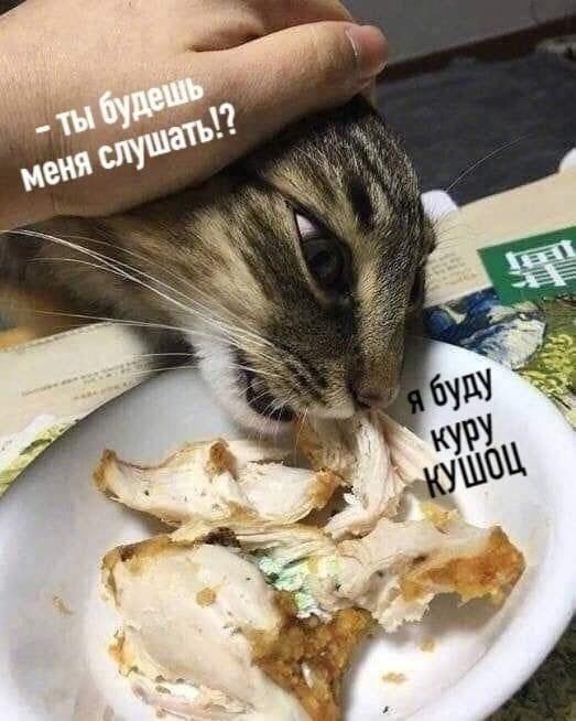 Кот — поэт