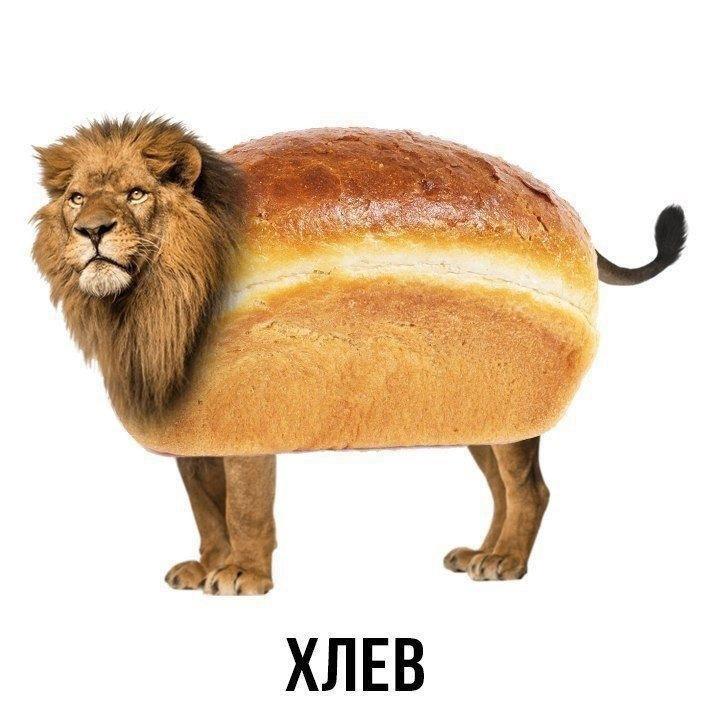 Животные + еда