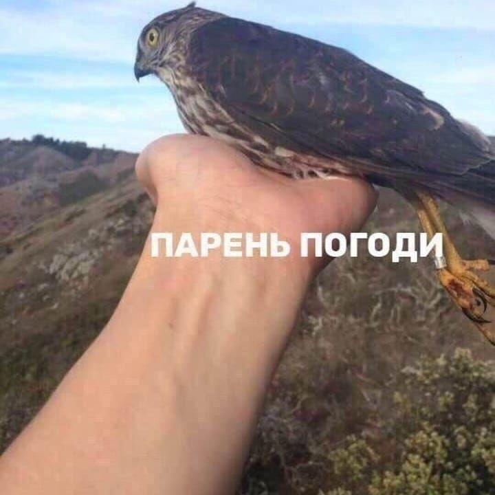 Была птица и нет птицы