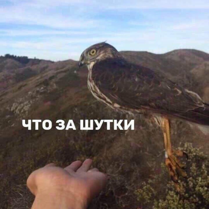 Ошибка природы