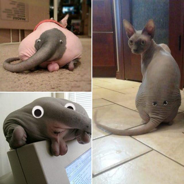 Котя в шоке